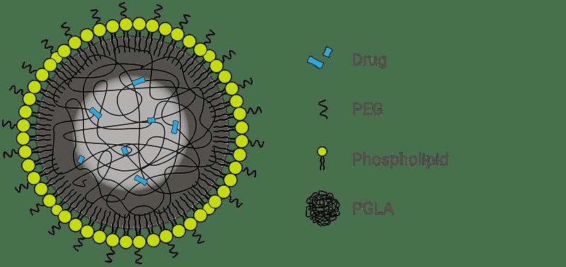 PGLA-core LNP@4x